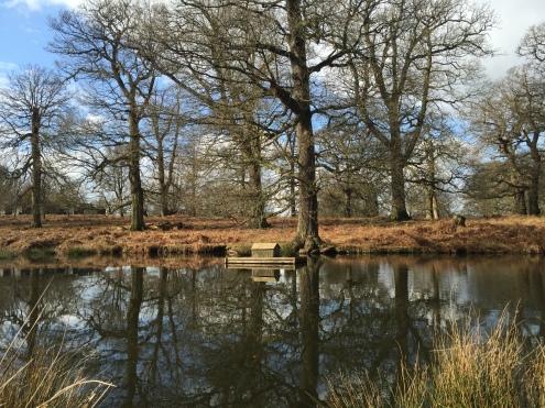 Knole Park, oak trees, Sevenoaks, Kent, England, running, fitness, exercise, outdoors, trees, travel, lifestyle, blog, blogger, family