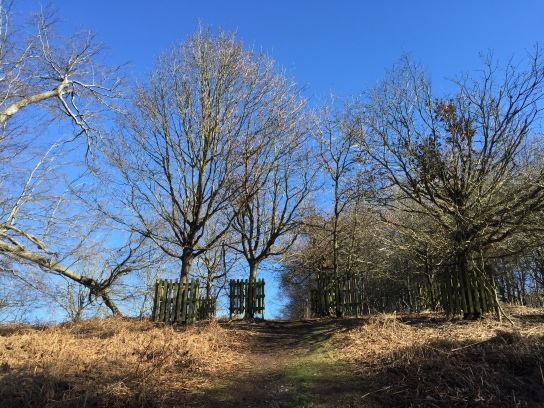 Knole Park, World Book Day, Sevenoaks, Kent, running, fitness, exercise, headspace