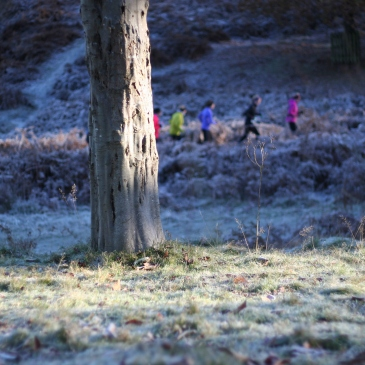 Knole Park, national trust, park land, running, exercise, fitness, seasons, winter, frost, kent, sevenoaks, England, UK, deer, deer park, travel, family travel, blog