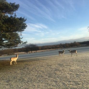 Knole, run, running, winter, sevenoaks, kent, England, UK, deer, exercise, fitness, outdoors, nature, countryside, travel, home, travelling, kids, family travel, wanderlust, blog, travelogue