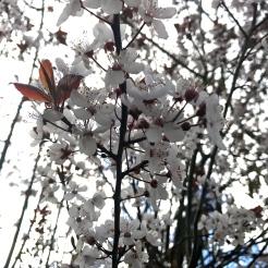 England, UK, nature, spring, flowers, outdoors, travel, travel blog, travelogue, travelbug, wanderlust, kids, family travel