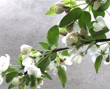 Apple tree, apple blossom, flowers, apples, neighbours, garden, gardening, plants, weeds, nature, spring, seasons, England, kent, UK, travel, home, travel bug, wanderlust, mindful, have paprika, paprika, family, kids, children.