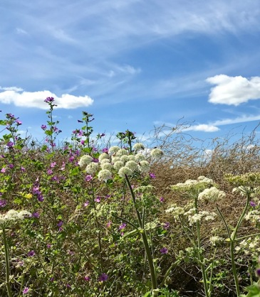 sussex, summer, country, wild life, sky, garden, plants, war, peace, insects, birds, family, travel, wanderlust, travel bug