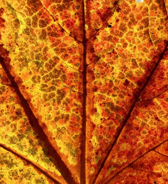 Jem's leaf
