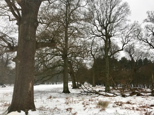 snow, running, training, Berlin, Kent, UK, nature, weather, seasons, travel, travelling, wanderlust, travel bug, lifestyle, outdoors, cooking, food