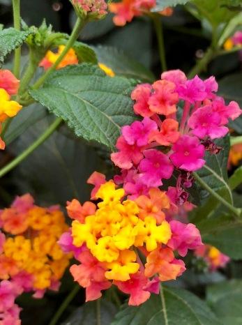flowers, Sevilla, Seville, Spain, travel, family travel, tapas, food, drink, travel bug, wanderlust, UK, Portugal