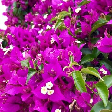 flowers, Portugal, Algarve, Spain, Seville, travel, family travel, travel bug, wanderlust, UK, England