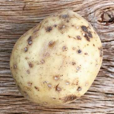 potato, cooking, kitchen, thyme, herbs, spices, simple, travel, culture, history
