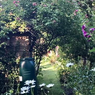 Cambridge, garden, England, people, stories, writing, running