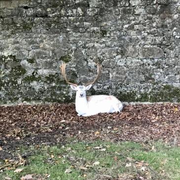 White hart, leaves, trees, ferns, nature, knole, deer, Kent, England, UK, running, walking