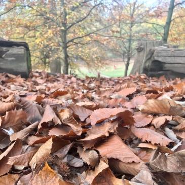 Sunday, Weekend, walk, run, Knole, trees, deer, autumn, fall, nature, sun, mist